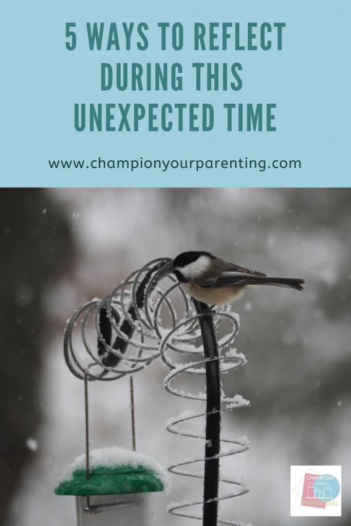 Bird on a snowy feeder